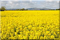 SO8645 : Oilseed rape and the Malvern Hill by Philip Halling