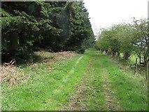 SO4465 : Path, Croft Wood by Richard Webb