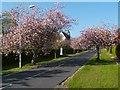 NS2982 : Colquhoun Street, Helensburgh by Lairich Rig