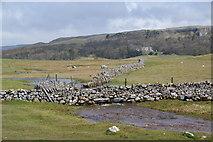 SD8965 : Water flowing from Malham Tarn by Bill Boaden