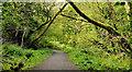 J3977 : Path, Holywood (2) by Albert Bridge
