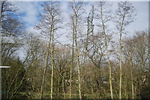 TQ2837 : Pylon in the woods by the Brighton Main Line by N Chadwick