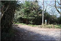 TQ4532 : Footpath off Kidd's Hill by N Chadwick