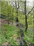 SE0421 : Sowerby Bridge Footpath 135 in Rough Hey Wood, Norland by Humphrey Bolton