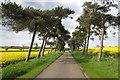 TL0029 : Lane from the Poplars, Toddington by Philip Jeffrey