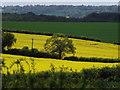 SU7249 : Downland by the Alton Road by Colin Smith