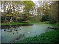 NZ1062 : Pond, Priestclose Wood Nature Reserve by Andrew Curtis