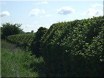 SK8158 : Hedgerow beside Langford Lane by JThomas