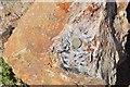SX5758 : Hemerdon Mine by Ashley Dace