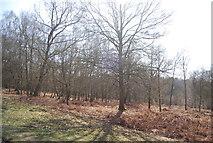 TQ4532 : Bracken in the trees by N Chadwick