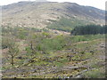 NM6731 : Conifer plantation, clear fell and native woodland near Strathcoil by M J Richardson