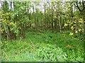SJ7370 : Shakerley Wood, at Shakerley Mere by Christine Johnstone