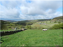 SK0167 : Staffordshire moorlands by Peter Barr