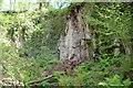 SX8197 : Posbury Clump Quarry by Ashley Dace