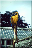 NJ9304 : Parrot on a Stick by Colin Smith