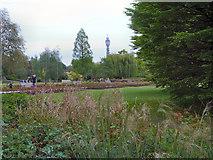 TQ2882 : Regent's Park, Queen Mary's Gardens by David Dixon