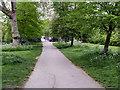 TQ2882 : Regent's Park by David Dixon