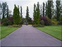 TQ2882 : Queen Mary's Gardens, Regent's Park by David Dixon
