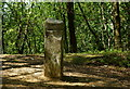 SU8935 : Milestone at Hindhead, Surrey by Peter Trimming
