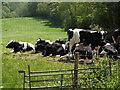 SU8147 : Beef'n'Turf by Colin Smith