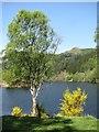 NN8760 : Loch Tummel by Richard Webb