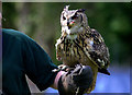 TF4323 : Eagle Owl with Handler, Long Sutton Falconry Centre, Lincolnshire by Christine Matthews