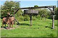 SK4117 : Horse Gin - Swannington by Ashley Dace