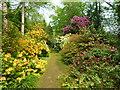 TQ9457 : Woodland Garden at Doddington Place, Doddington by pam fray
