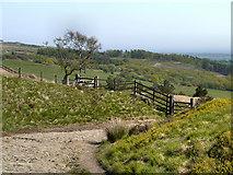 SD6413 : Rivington Moor, Brown Hill by David Dixon
