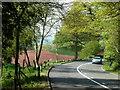 SJ7839 : A53 near War Hill by Andrew Hill