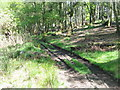 NO2251 : The Cateran Trail at Bamff by M J Richardson