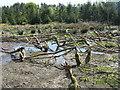 NO2151 : Beaver wetland at Bamff by M J Richardson