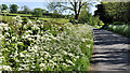 J2760 : Spring verge, Ravernet near Lisburn by Albert Bridge