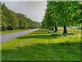 SJ4282 : The Driveway To Speke Hall by David Dixon