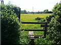 SP9320 : Stile and Field of Buttercups, Slapton by Bikeboy