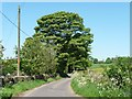 SK0448 : Large tree along Shaw-wall Lane by Christine Johnstone