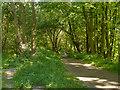 SD7605 : Footpath at Ringley by David Dixon