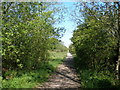 NZ3842 : Footpath to Haswell from Pesspool Wood by John Slater
