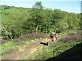 SK0253 : Tree-felling below the railway embankment by Christine Johnstone