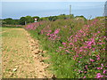 SW7849 : Field edge near Little Tresawsen by Rod Allday