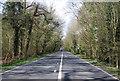TQ1129 : A264, Rookery Wood by N Chadwick