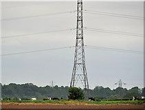 J2965 : Pylon and power lines, Tullynacross near Lisburn by Albert Bridge