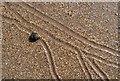 NT6084 : Snail tracks on Seacliff Beach by Walter Baxter