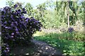 SE9405 : Rhododendrons at Entrance path to Twigmoor Wood by J.Hannan-Briggs