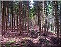 NN9902 : Forestry plantation by William Starkey