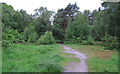 TG4600 : Native trees on the outskirts of Fritton Woods by Roger Jones