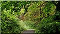 J3278 : Path, Belfast Castle (2) by Albert Bridge