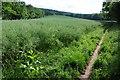 SO4813 : Oilseed rape field beside Offa's Dyke Path by Philip Halling
