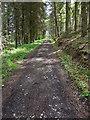 SE8589 : Green Dale, Thwaite Wood by Scott Robinson