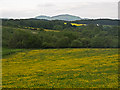 NS9194 : Meadow by Gartmorn Dam by William Starkey